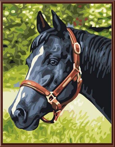 Картина по номерам 30х40 «Лошадь вороная»